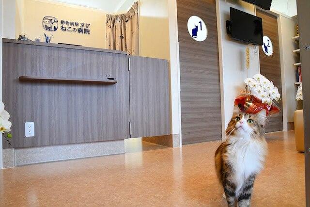 「動物病院京都 ねこの病院」の受付