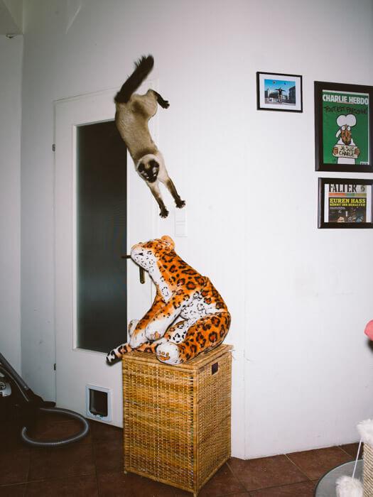 Daniel Gebhart de Koekkoek撮影、スパイダーマン猫