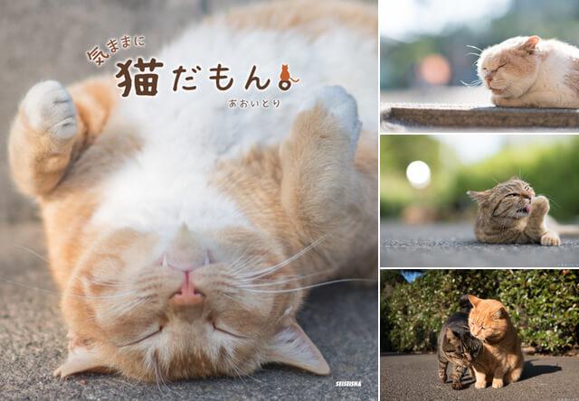 写真家あおいとりの写真集「気ままに猫だもん。」パネル展を開催