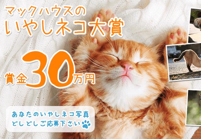 賞金30万円の猫フォトコンテスト「いやしネコ大賞」が開催中