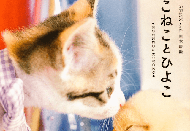 子猫とヒヨコがコラボした写真集「こねことひよこ」が発売中