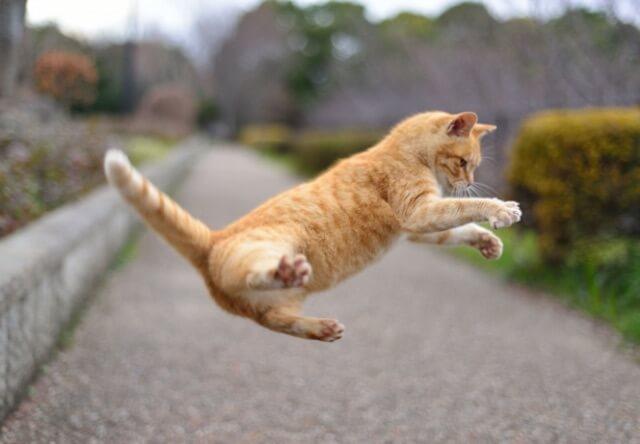テレビ番組「生き物にサンキュー!!」に出演する愛猫を募集中