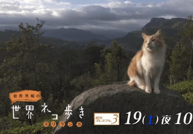 岩合光昭の世界ネコ歩き、11/19の新作は「スリランカ」