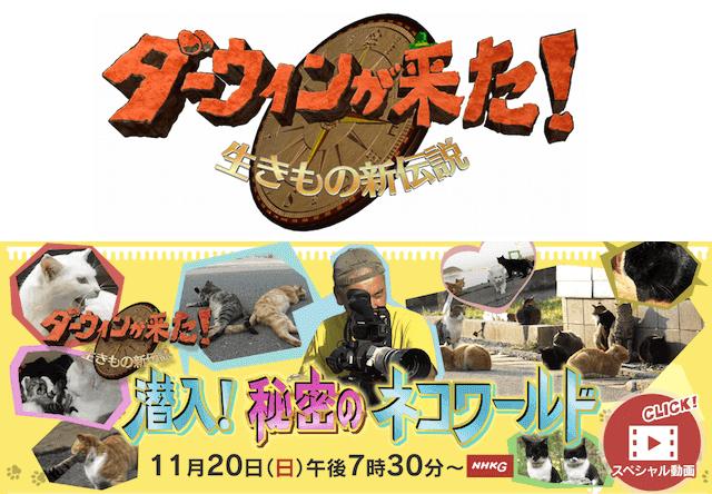 11/20放送のダーウィンが来た!は番組史上初の猫特集
