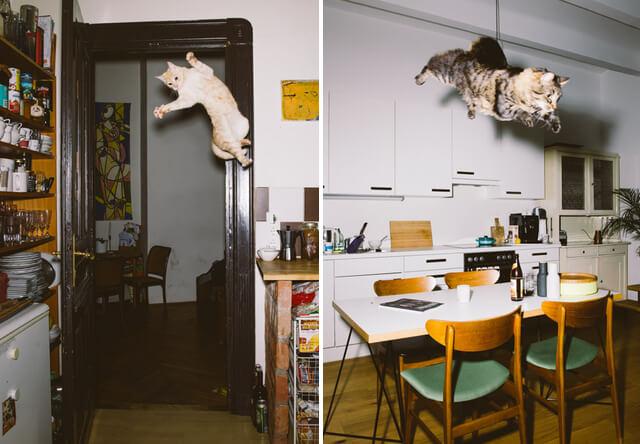 ミルコ以外にもいた!オーストリアの写真家が捉えたジャンプ猫