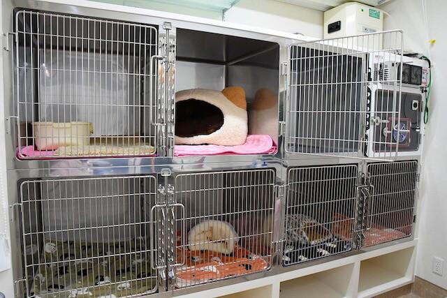 「動物病院京都 ねこの病院」のペットホテル