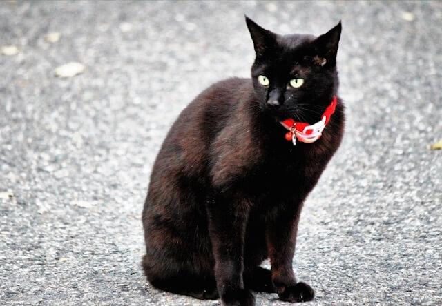 路上にたたずむ黒猫の写真