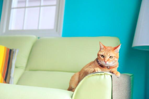 フェリシモ猫部の爪とぎシート、ソファに置いた様子