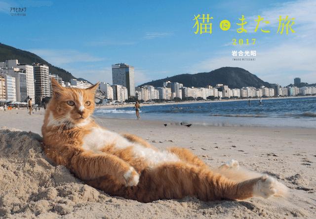 アサヒカメラの特別付録「猫にまた旅2017」の表紙猫写真