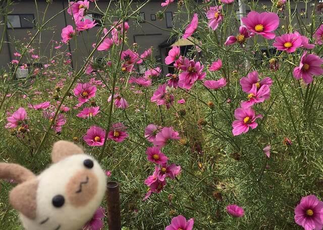 「にゃんころ」のぬい撮り花写真