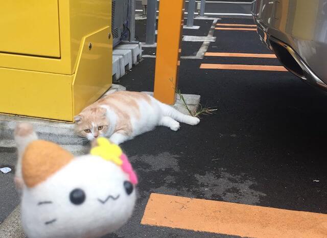 「にゃんころ」のぬい撮り猫写真