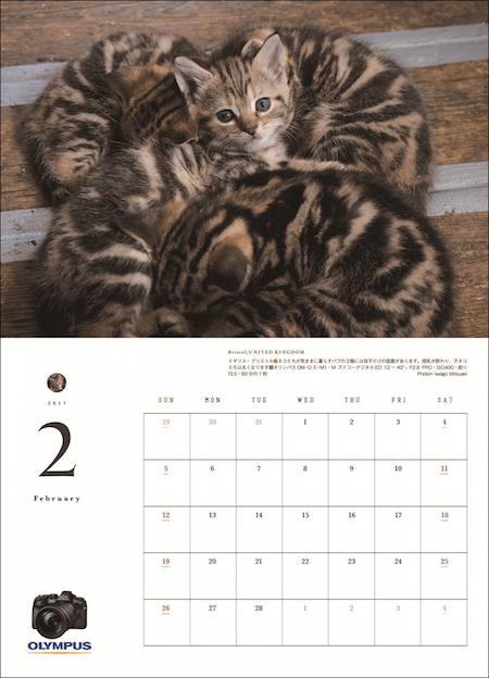 アサヒカメラの特別付録「猫にまた旅2017」の2月の猫写真