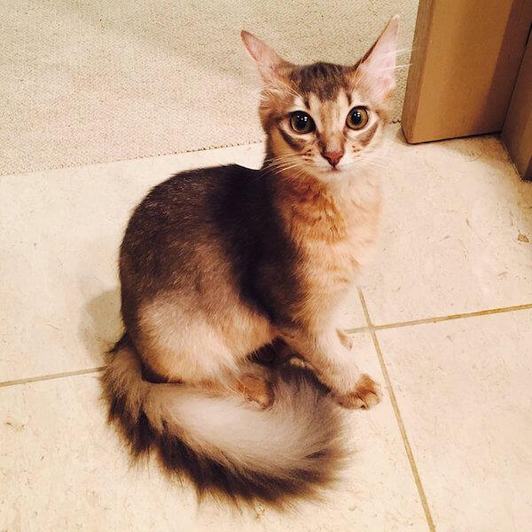ダレノガレ明美さんの愛猫、ソマリの「ジジ吉」