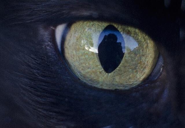 黒猫の写真、目のアップ