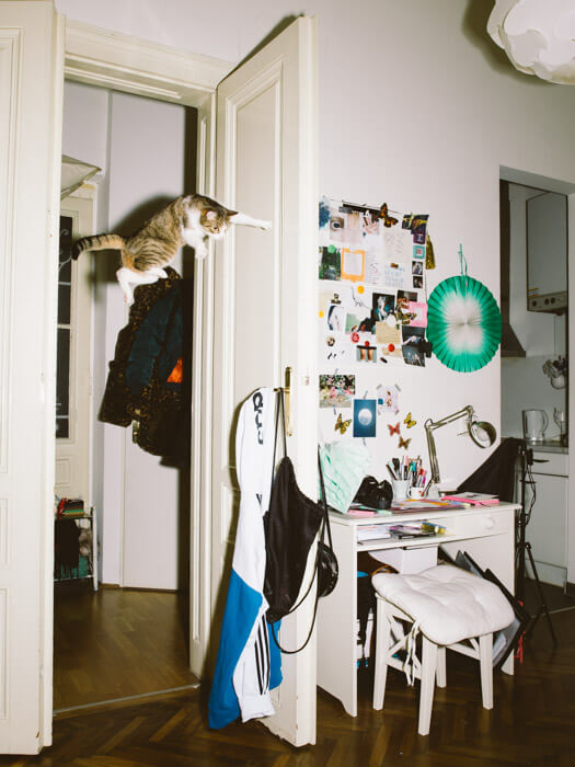 Daniel Gebhart de Koekkoek撮影、ハイジャンパー猫