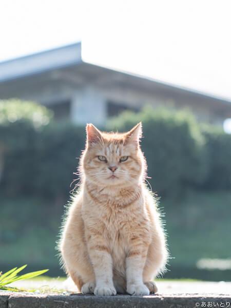 写真集「気ままに猫だもん。」の掲載ネコ写真1