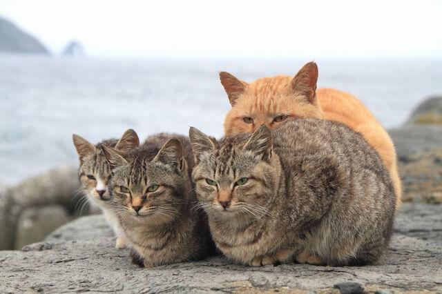 猫の島として有名な福岡県「相島」の猫写真