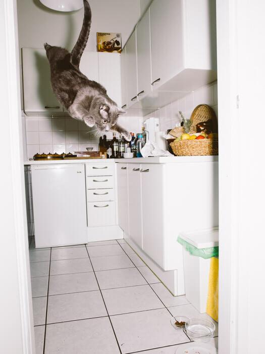 Daniel Gebhart de Koekkoek撮影、ムササビのように飛び降りる猫