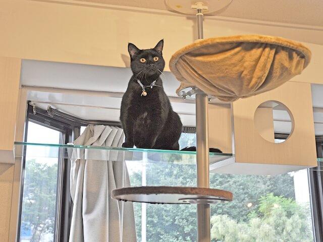 猫用フリースペースにある、強化ガラスで出来たキャットウォーク