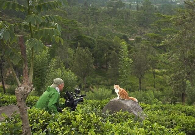 世界ネコ歩きに登場するスリランカの紅茶畑にいる猫と岩合さん