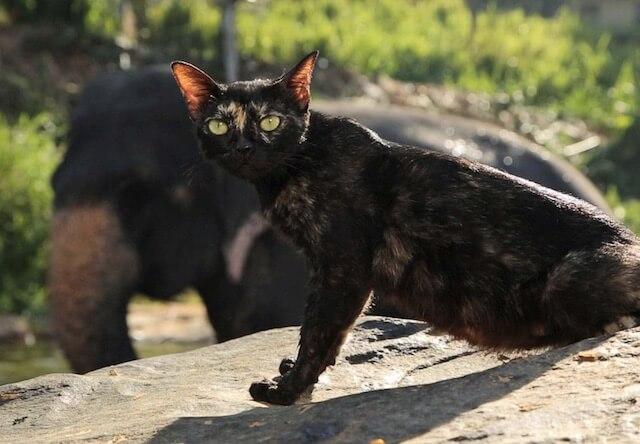 世界ネコ歩きに登場する、スリランカの象の水場で暮らす猫