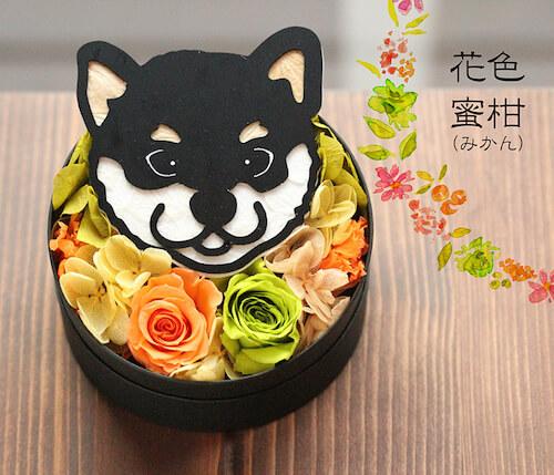 蜜柑×黒柴のプリザーブドフラワー「Animal Candy」