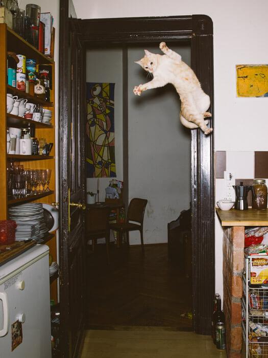 Daniel Gebhart de Koekkoek撮影、高くジャンプするネコ