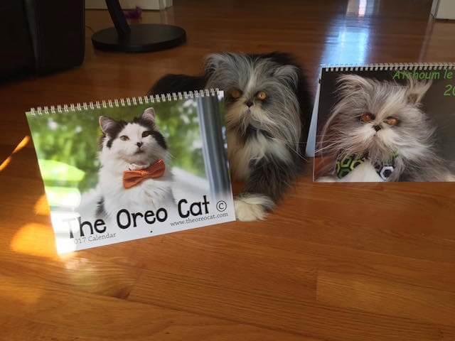 犬に似ている猫、アチョム(Atchoum)君のカレンダー