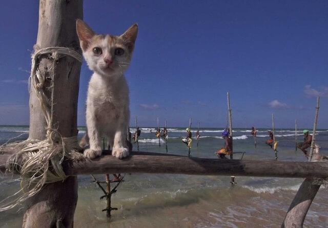 世界ネコ歩きに登場する、スリランカのインド洋を望む浜辺の猫