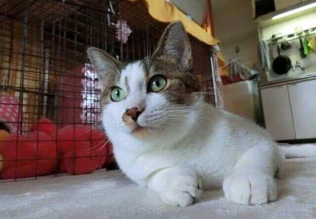 かつらお見守り隊の保護猫