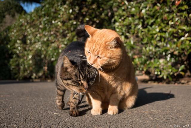 写真集「気ままに猫だもん。」に登場する仲良しネコ