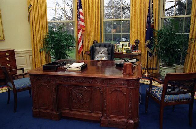 大統領の椅子に座る、犬に似ている猫「アチョム(Atchoum)」