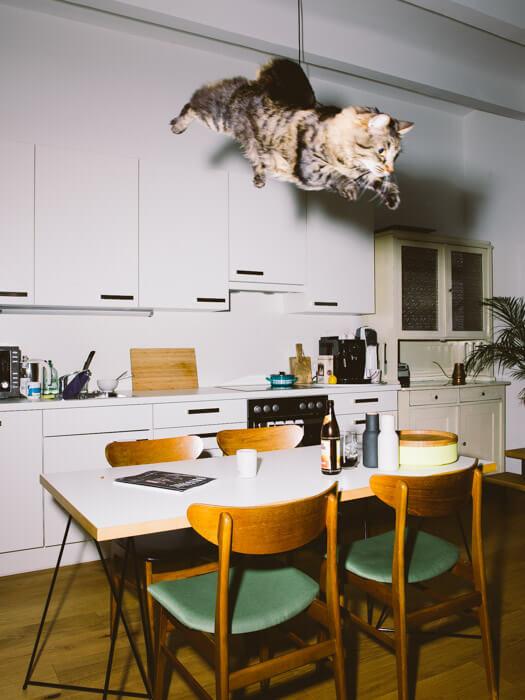 Daniel Gebhart de Koekkoek撮影、テーブルの上に落ちてきそうな猫