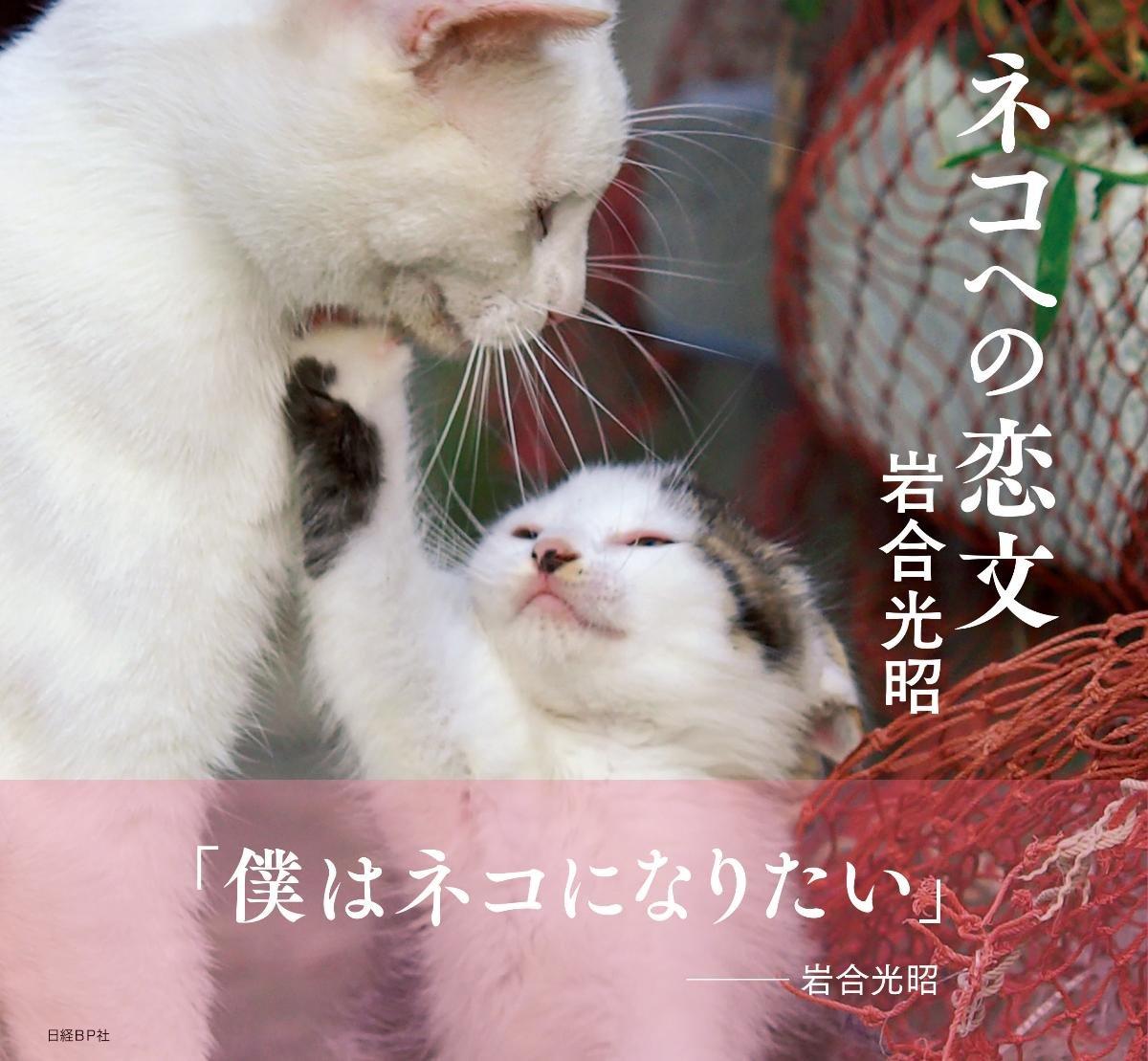 岩合光昭写真集「ネコへの恋文」表紙イメージ