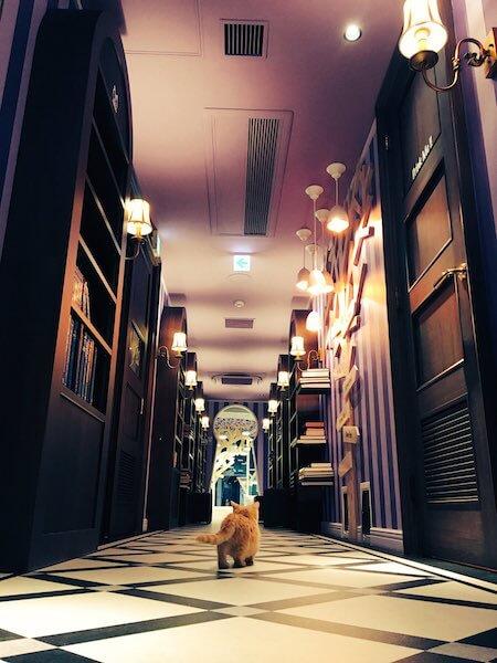 猫カフェ「MoCHA(モカ)」原宿の竹下通り店