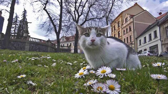 岩合光昭の世界ネコ歩き「チェコ」に登場する猫