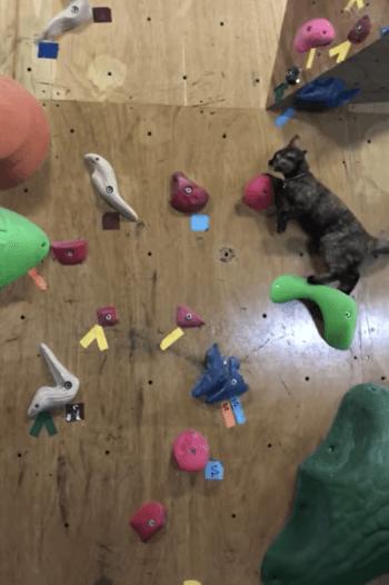 ボルタリングを始める猫