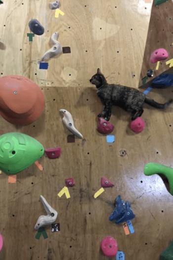 ボルタリングする猫の写真2