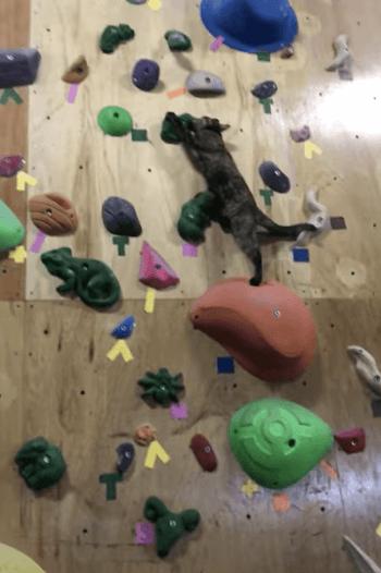 手足を伸ばしながらボルタリングする猫