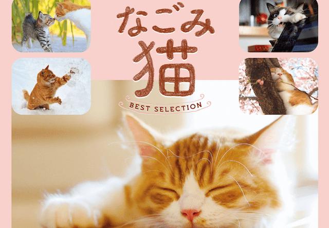 人気猫カレンダー「なごみ猫」の写真集ベストセレクションが登場