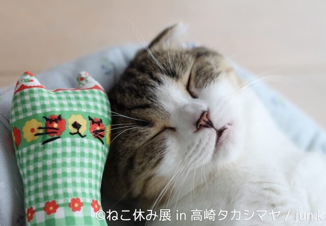 大人気の猫イベント「ねこ休み展」が高崎タカシマヤで開催