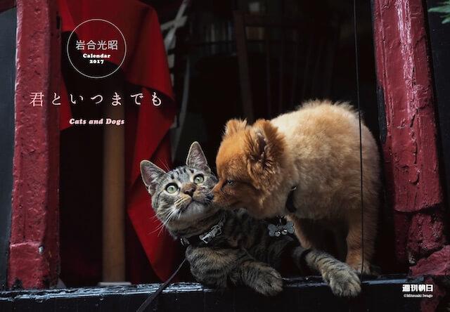 週刊朝日に付属する岩合さん撮影の猫&犬のカレンダー、「君といつまでも」