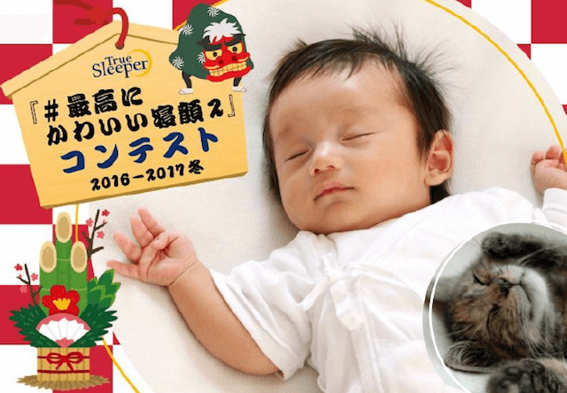 猫の寝顔写真でトゥルースリーパーをゲットできるコンテスト