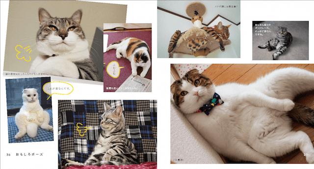 ネコ写真集「なごみ猫 BEST SELECTION(ベストセレクション)」の写真イメージ1