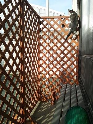 ラティス・柵を登る猫の写真
