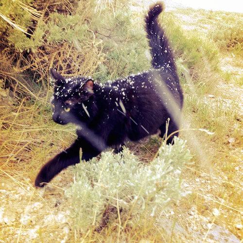 凛々しい表情のロッククライミング猫、ミリーちゃん