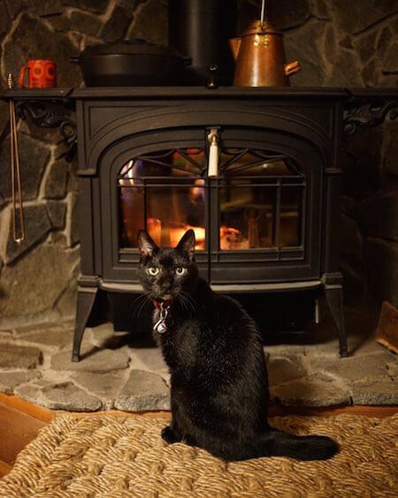 世界を旅するネコで有名な黒猫、「ノロ」の写真