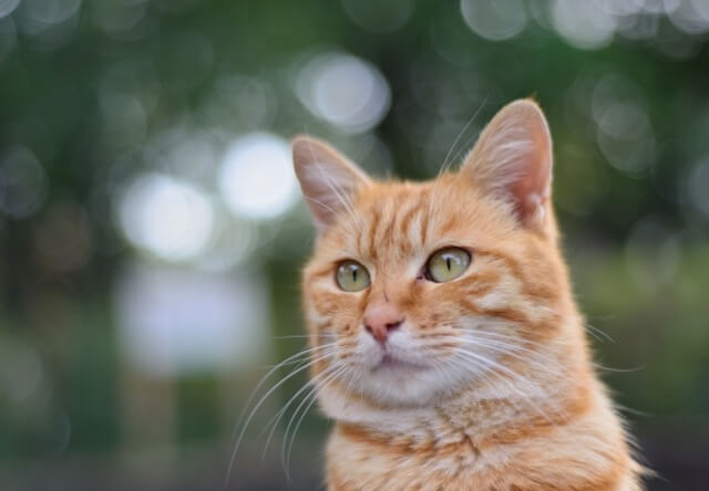 猫の伝説がある踊場駅で写真展が開催、12/31まで猫の写真を募集中