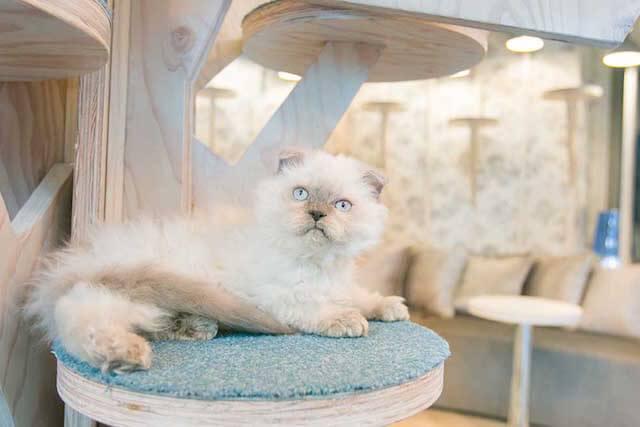 MoCHA(モカ)原宿竹下通り店の猫写真1