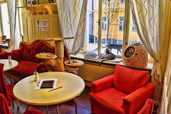 チェコの首都・プラハで最初にオープンした猫カフェ、コチュカフェ(Kockafe)